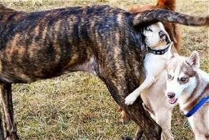 Dog Sniff